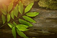 Φύλλο κανέλας, τροπικό φύλλο, τροπικό καρύκευμα, τροπικό Ingrediant, ξύλινος πίνακας στοκ φωτογραφίες με δικαίωμα ελεύθερης χρήσης