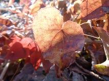 φύλλο καρδιών που διαμο&rho Στοκ φωτογραφία με δικαίωμα ελεύθερης χρήσης