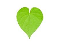 Φύλλο καρδιών Στοκ Φωτογραφίες