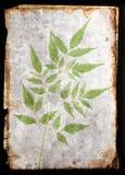 φύλλο καρτών Στοκ εικόνες με δικαίωμα ελεύθερης χρήσης