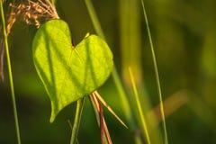 Φύλλο καρδιών Στοκ φωτογραφία με δικαίωμα ελεύθερης χρήσης