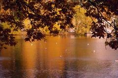 φύλλο κλάδων φθινοπώρου πάρκων πουλιών αντανάκλασης νερού λιμνών braun Στοκ Φωτογραφία