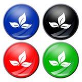 φύλλο κουμπιών στοκ φωτογραφία με δικαίωμα ελεύθερης χρήσης