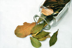 φύλλο κόλπων που χύνεται έξ στοκ εικόνες