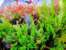 Φύλλο λουλουδιών στοκ εικόνες