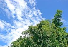 Φύλλο μπαμπού με το υπόβαθρο και τα σύννεφα μπλε ουρανού Στοκ φωτογραφίες με δικαίωμα ελεύθερης χρήσης
