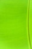 φύλλο μπαμπού Στοκ φωτογραφία με δικαίωμα ελεύθερης χρήσης