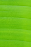 φύλλο μπανανών Στοκ Φωτογραφίες
