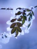 φύλλο πάγου Στοκ εικόνες με δικαίωμα ελεύθερης χρήσης