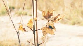 Φύλλο που τυλίγει από τον αέρα φιλμ μικρού μήκους