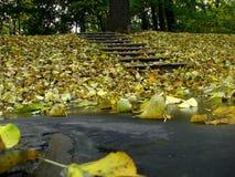φύλλο πτώσης φθινοπώρου Στοκ Φωτογραφίες
