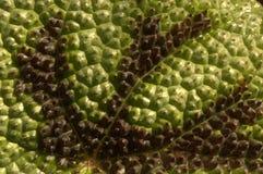 Φύλλο στο bothanic κήπο στοκ εικόνες