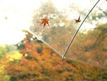 Φύλλο σφενδάμου πτώσης στο Κιότο, Ιαπωνία στοκ εικόνες