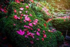 Φύλλο σφενδάμου στο πράσινο βρύο στο τροπικό τροπικό δάσος Στοκ εικόνα με δικαίωμα ελεύθερης χρήσης