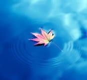 Φύλλο σφενδάμου φθινοπώρου στο ύδωρ Στοκ Φωτογραφία