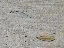 φύλλο σφραγίδων Στοκ φωτογραφίες με δικαίωμα ελεύθερης χρήσης