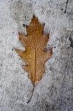 Φύλλο το φθινόπωρο Στοκ φωτογραφία με δικαίωμα ελεύθερης χρήσης