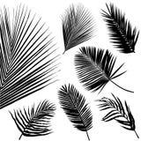 φύλλο τροπικό διανυσματική απεικόνιση