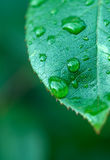 φύλλο υγρό Στοκ Εικόνα