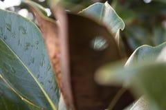 Φύλλο υποβάθρου στην εστίαση στοκ φωτογραφία με δικαίωμα ελεύθερης χρήσης