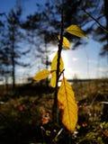 Φύλλο φθινοπώρου στοκ εικόνες με δικαίωμα ελεύθερης χρήσης