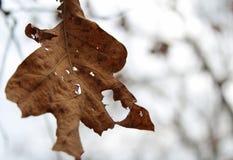Φύλλο φθινοπώρου ακόμα στον κλάδο Στοκ φωτογραφία με δικαίωμα ελεύθερης χρήσης