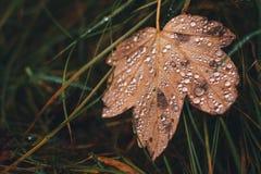 Φύλλο φθινοπώρου με τη δροσιά Στοκ Εικόνες