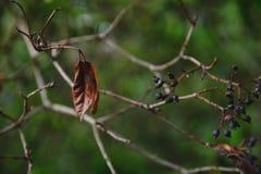 Φύλλο φθινοπώρου σε έναν κλάδο στοκ εικόνα με δικαίωμα ελεύθερης χρήσης