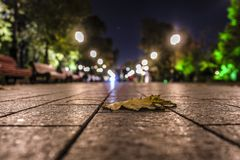 φύλλο φθινοπώρου σε ένα πεζοδρόμιο στοκ φωτογραφία με δικαίωμα ελεύθερης χρήσης
