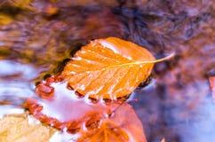 Φύλλο φθινοπώρου στο νερό Κίτρινο φύλλο στο νερό η σύνθεση κεριών φθινοπώρου μήλων ξηρά βγάζει φύλλα vase απόλυσης Στοκ Φωτογραφίες