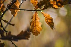 Φύλλο φθινοπώρου στο υπόβαθρο ενός ηλιόλουστου λιβαδιού, εποχή φθινοπώρου Στοκ Φωτογραφίες