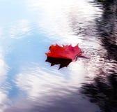 Φύλλο φθινοπώρου στο ύδωρ Στοκ φωτογραφία με δικαίωμα ελεύθερης χρήσης