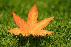φύλλο φθινοπώρου Στοκ εικόνα με δικαίωμα ελεύθερης χρήσης