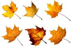φύλλο φθινοπώρου Στοκ φωτογραφίες με δικαίωμα ελεύθερης χρήσης