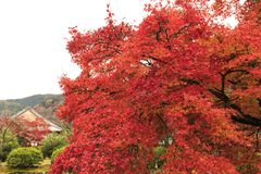 Φύλλο φθινοπώρου Arashiyama Στοκ φωτογραφία με δικαίωμα ελεύθερης χρήσης