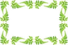 φύλλο φλογών Στοκ εικόνα με δικαίωμα ελεύθερης χρήσης