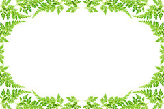 φύλλο φλογών Στοκ φωτογραφία με δικαίωμα ελεύθερης χρήσης
