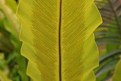Φύλλο φτερών με τα σπόρια στοκ φωτογραφία με δικαίωμα ελεύθερης χρήσης