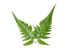 φύλλο φτερών Στοκ εικόνα με δικαίωμα ελεύθερης χρήσης
