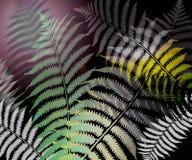 φύλλο φτερών Στοκ εικόνες με δικαίωμα ελεύθερης χρήσης