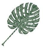 Φύλλο φυτού Monstera Στοκ φωτογραφία με δικαίωμα ελεύθερης χρήσης