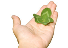 φύλλο χεριών Στοκ εικόνες με δικαίωμα ελεύθερης χρήσης
