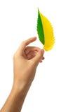φύλλο χεριών Στοκ Φωτογραφία