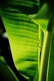 φύλλο στοκ φωτογραφία με δικαίωμα ελεύθερης χρήσης