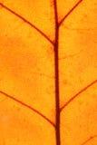 φύλλο στοκ εικόνα με δικαίωμα ελεύθερης χρήσης