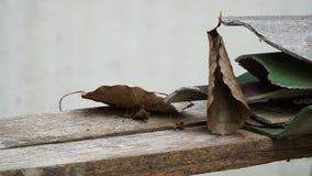 Φύλλο Bodhi και ραγισμένο κεραμίδι στεγών Στοκ φωτογραφίες με δικαίωμα ελεύθερης χρήσης
