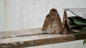 Φύλλο Bodhi και ραγισμένο κεραμίδι στεγών Στοκ φωτογραφία με δικαίωμα ελεύθερης χρήσης