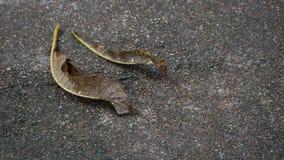 Φύλλο Plumeria†‹στο πάτωμα Στοκ Εικόνες