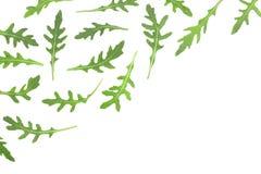 Φύλλο Rucola ή arugula που απομονώνεται στο άσπρο υπόβαθρο με το διάστημα αντιγράφων για το κείμενό σας Τοπ όψη Επίπεδος βάλτε το Στοκ Φωτογραφίες