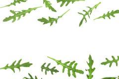 Φύλλο Rucola ή arugula που απομονώνεται στο άσπρο υπόβαθρο με το διάστημα αντιγράφων για το κείμενό σας Τοπ όψη Επίπεδος βάλτε το Στοκ φωτογραφία με δικαίωμα ελεύθερης χρήσης